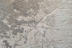 Eight pointed star with feather pattern